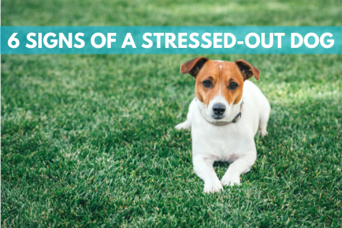 Do you recognize these six signs of a stressed-outdog?
