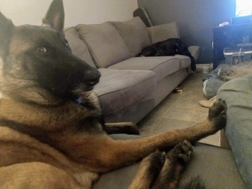 How do I get my dog to settle when I'm watching tv?