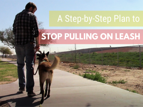 Does Your Dog Pull on Leash? A Step by Step Plan to Teach Loose-Leash Walking