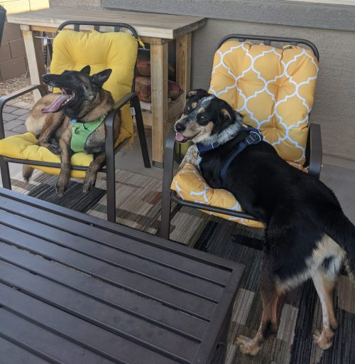 Tips for introducing dog to each other