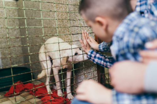 beginner's guide to adopted dog ownership