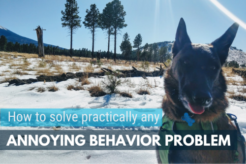 How to Solve Annoying Dog Behavior Problems