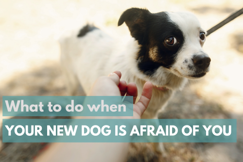 what to do when your new dog is afraid of you