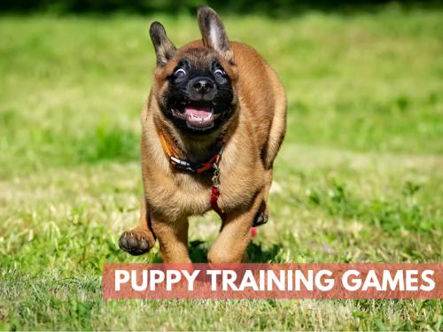 Fun Puppy Training Games
